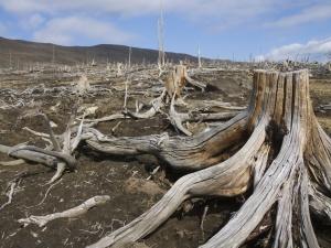 Dead-wood1